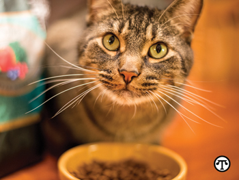 It's a healthy idea to keep your cat well hydrated.